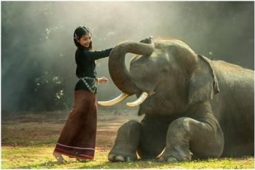 Power Animal Meditation:  Manifesting Goals